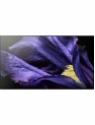 Sony Series AF9 KD-55AF9 55 Inch Ultra HD 4K Smart Android OLED TV